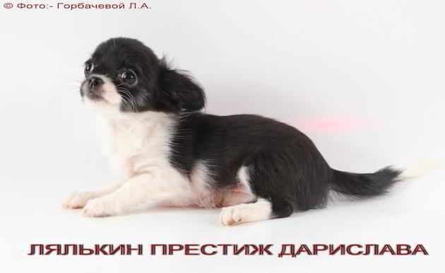Детки от производителей других питомников Foto_max_102424685651e2a587557841.73556537