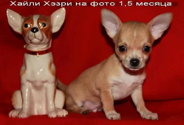 Дети Сёмочки-дети Намиами Жиган Сема Хулиган Foto_max_21274725024fd34572ae9204.65144132