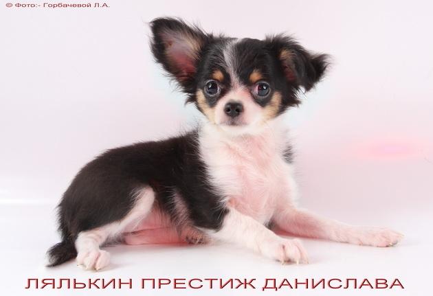 Детки от производителей других питомников Foto_max_32066415551e2983b2b95d3.46854670
